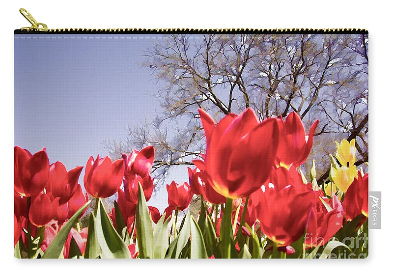 Tulips Carry-all Pouch featuring the photograph Tulips At Dallas Arboretum V62 by Douglas Barnard