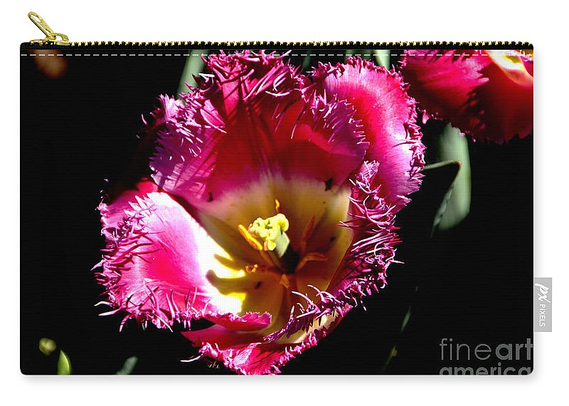 Tulips Carry-all Pouch featuring the photograph Tulips At Dallas Arboretum V77 by Douglas Barnard
