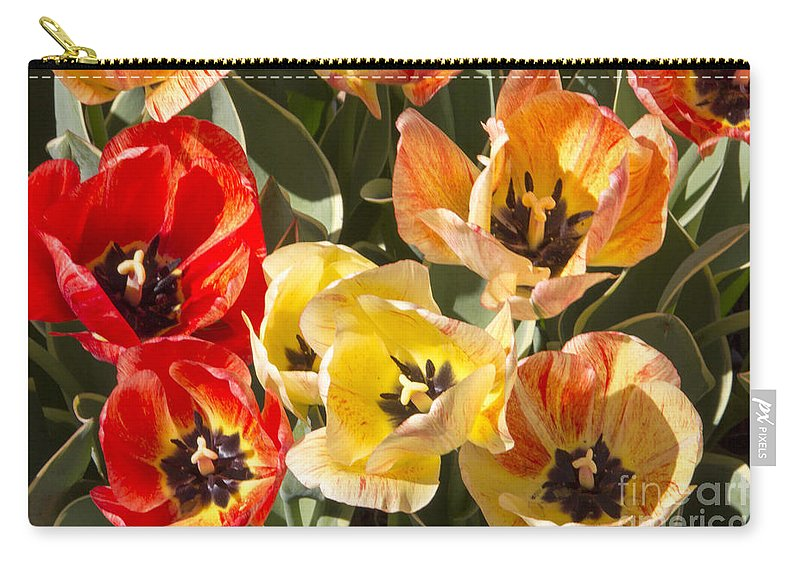 Tulips Carry-all Pouch featuring the photograph Tulips At Dallas Arboretum V79 by Douglas Barnard