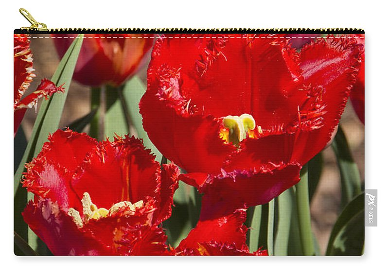 Tulips Carry-all Pouch featuring the photograph Tulips At Dallas Arboretum V83 by Douglas Barnard