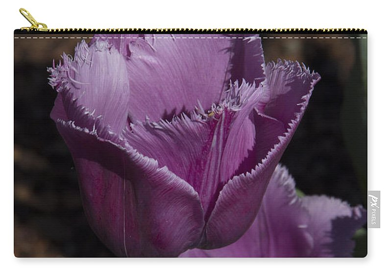 Tulips Carry-all Pouch featuring the photograph Tulips At Dallas Arboretum V88 by Douglas Barnard