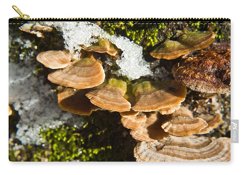 Turkey Carry-all Pouch featuring the photograph Turkey Tail Bracket Fungi by Douglas Barnett