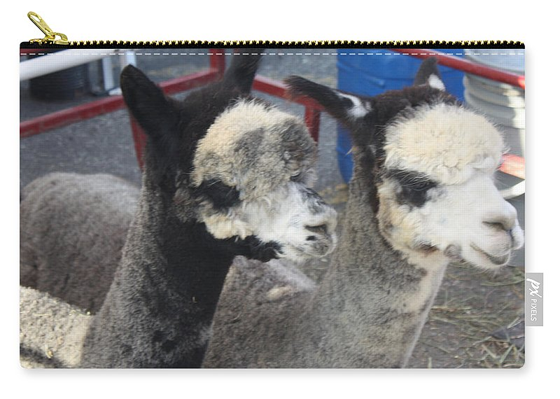 Two Alpacas Carry-all Pouch featuring the photograph Two Alpacas by John Telfer
