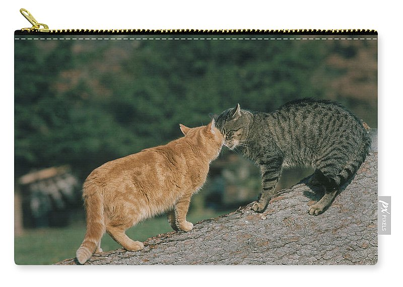 Two Cats Nuzzling Heads Carry,all Pouch