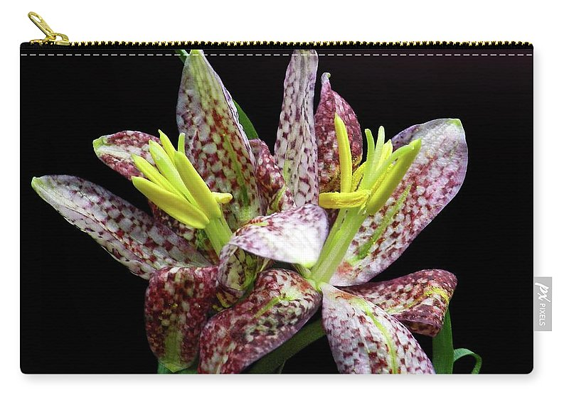 Black Background Carry-all Pouch featuring the photograph Two Checkered Daffodils by Gitpix