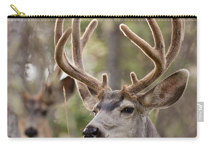 Adult Carry-all Pouch featuring the photograph Two Mule Deer Bucks With Velvet Antlers by Stephan Pietzko