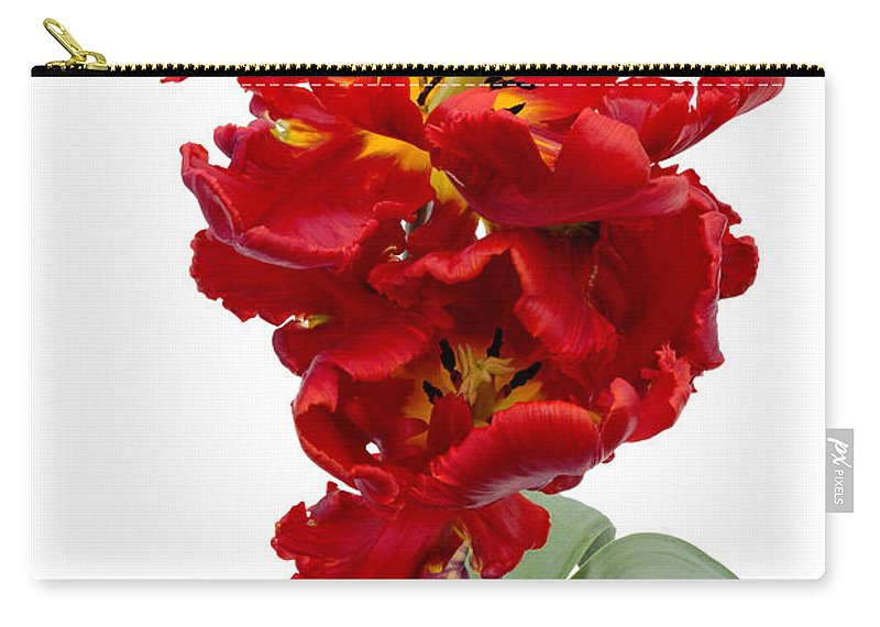 Ann Garrett Carry-all Pouch featuring the photograph Two Red Parrot Tulips by Ann Garrett