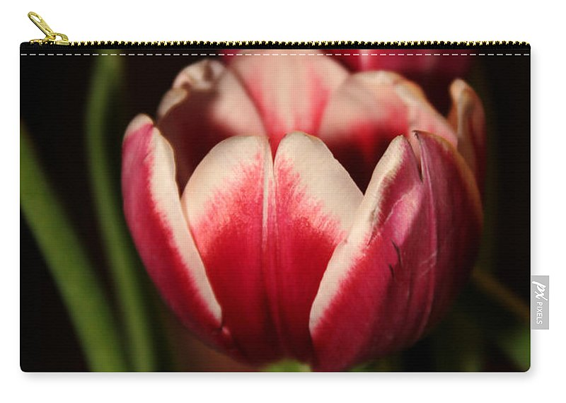 Macro Carry-all Pouch featuring the photograph Two Red Tulips by Sabrina L Ryan