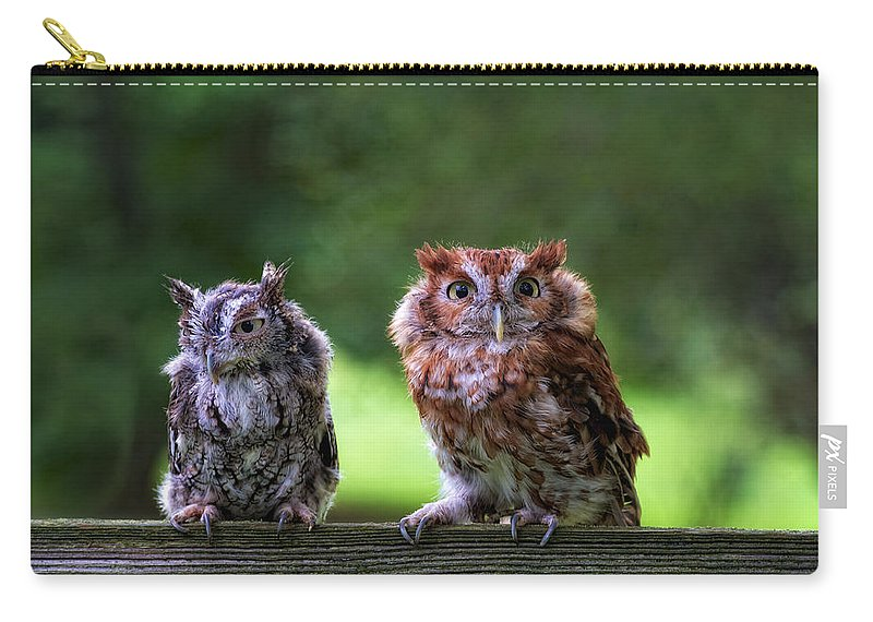 Animal Carry-all Pouch featuring the photograph Two Screech Owls by David Kay
