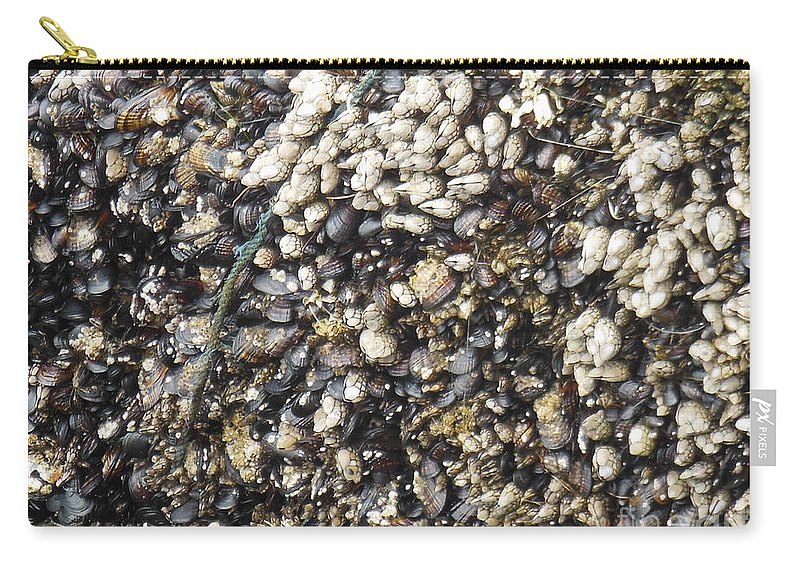 Under The Pier Carry-all Pouch featuring the photograph Under The Pier by Mini Arora