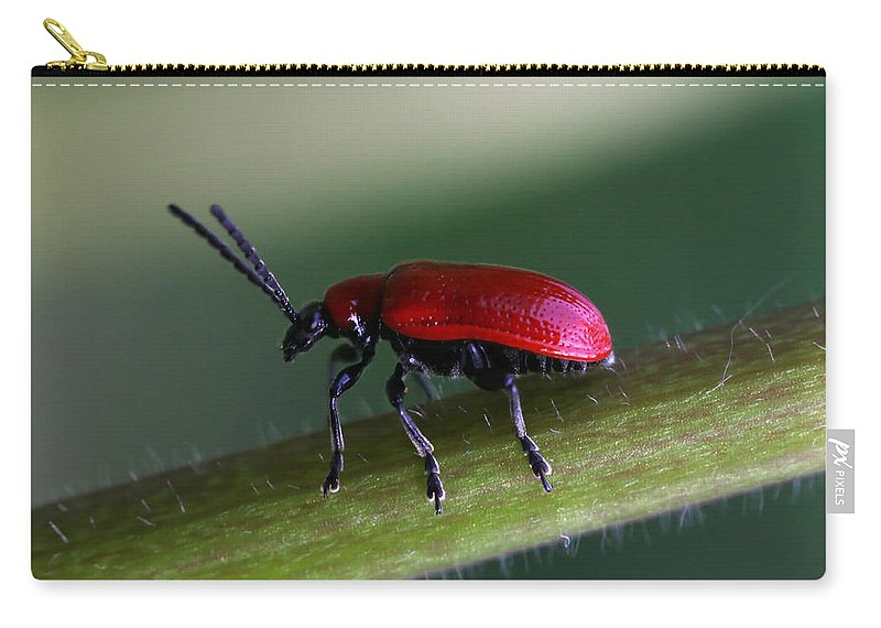 Insects Carry-all Pouch featuring the photograph Under Way by Annie Snel