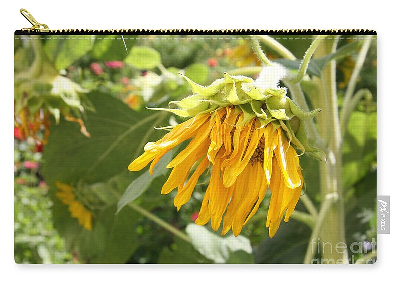 Sunflower Carry-all Pouch featuring the photograph Unripe Sunflowers by Lali Kacharava