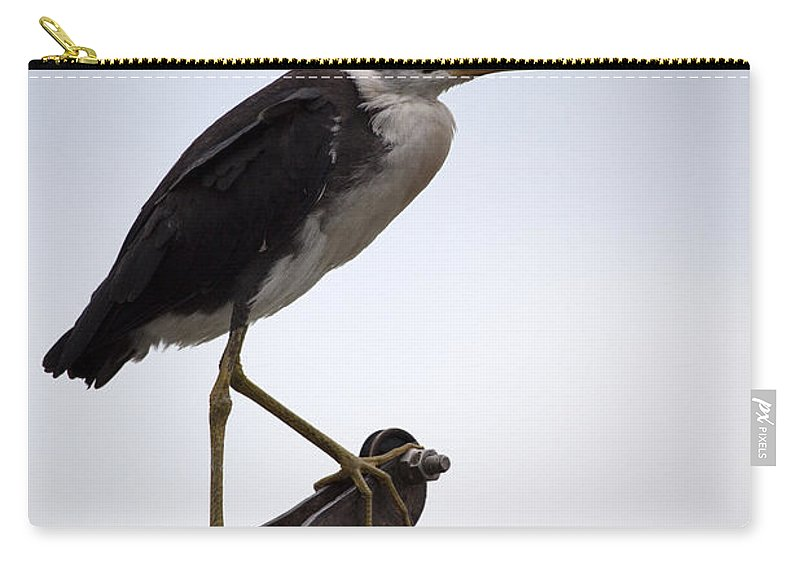 White Necked Heron Carry-all Pouch featuring the photograph Vantage Point V10 by Douglas Barnard