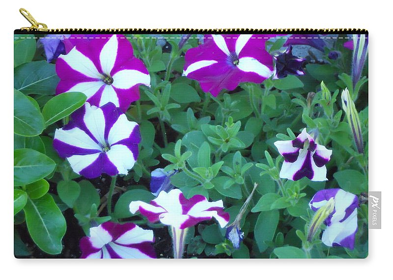 Flowers Carry-all Pouch featuring the photograph Variegated Petunias by Coleen Harty
