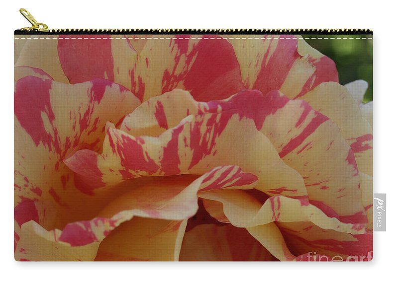 Yellow Carry-all Pouch featuring the photograph Variegated Rose by Jacklyn Duryea Fraizer