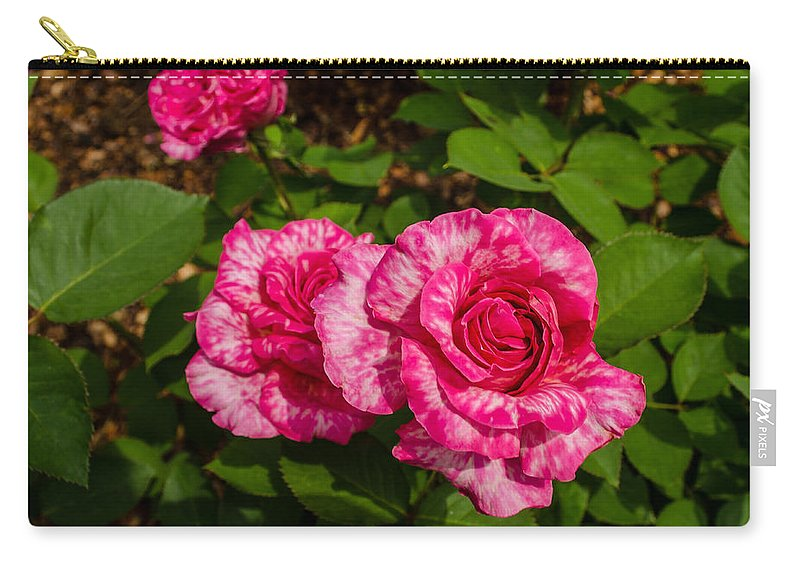Dallas Carry-all Pouch featuring the photograph Variegated Roses by Allen Sheffield