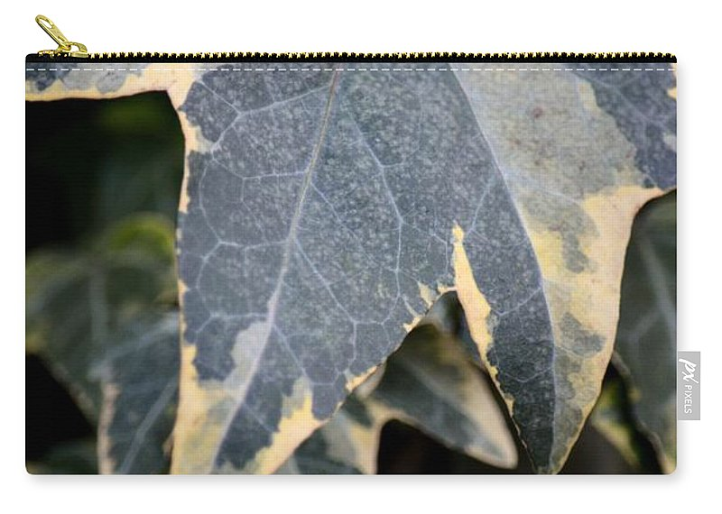 Varigated Ivy Leaves Carry-all Pouch featuring the photograph Varigated Ivy Leaves by Maria Urso