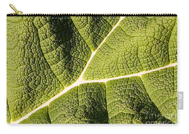 Botanical Carry-all Pouch featuring the photograph Veins Of A Leaf by John Wadleigh