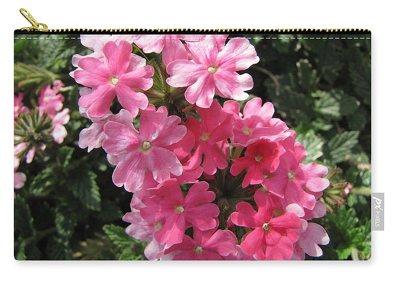 Verbena Carry-all Pouch featuring the photograph Verbena II by Beth Vincent