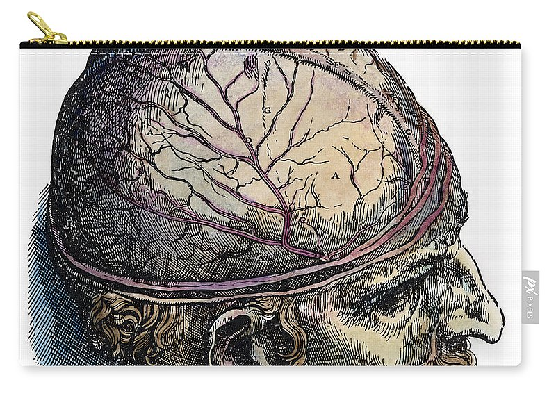 1543 Carry-all Pouch featuring the photograph Vesalius: Cranium by Granger