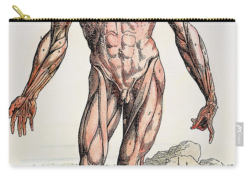 1543 Carry-all Pouch featuring the photograph Vesalius: Muscles 01 by Granger