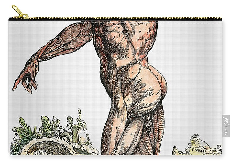 1543 Carry-all Pouch featuring the photograph Vesalius: Muscles 02, 1543 by Granger