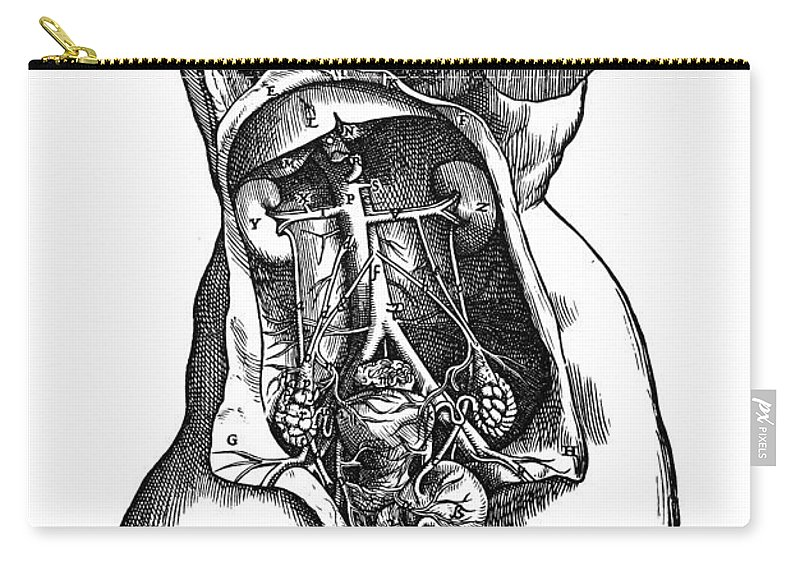 1543 Carry-all Pouch featuring the photograph Vesalius: Urogenital by Granger