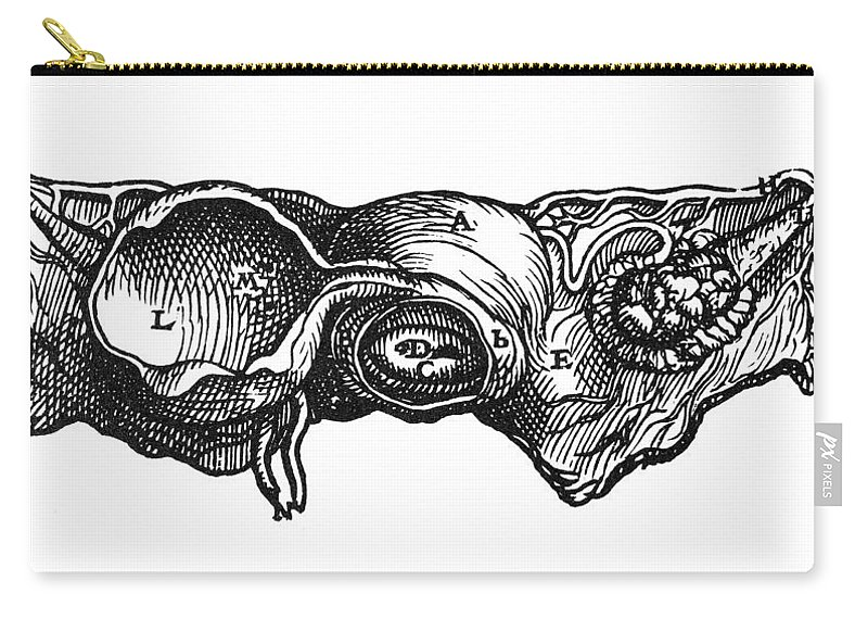 1543 Carry-all Pouch featuring the photograph Vesalius: Uterus, 1543 by Granger