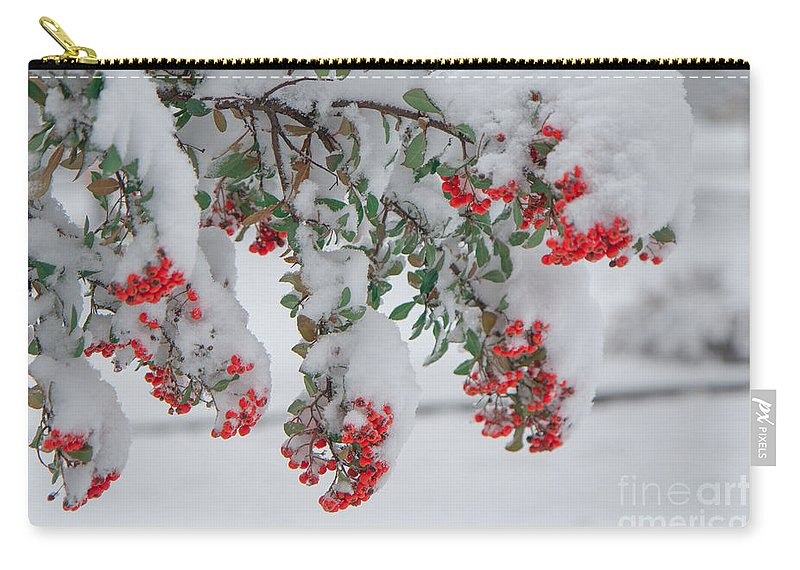 Shrubs Carry-all Pouch featuring the photograph Viburnum Shrub In Snow by Jivko Nakev