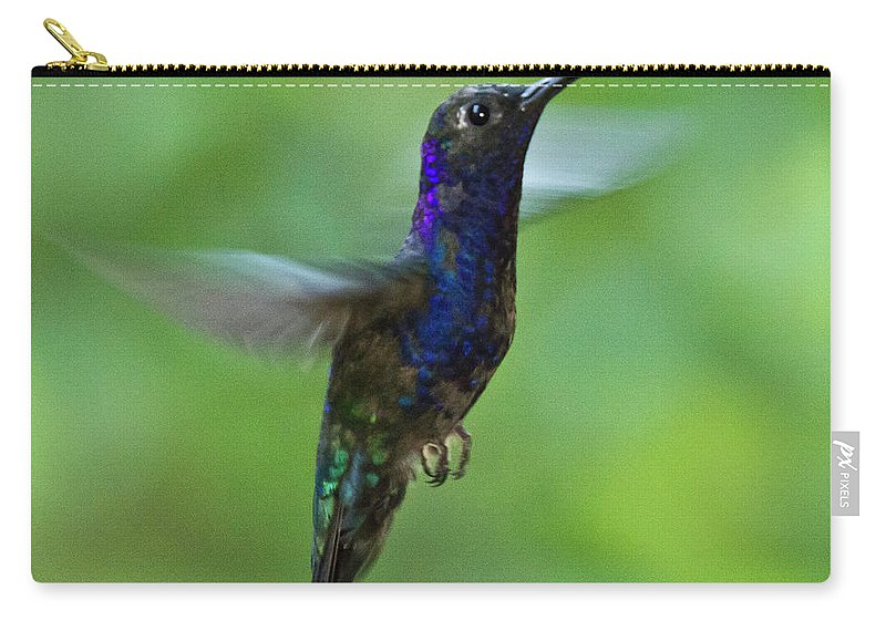 Violet Sabrewing Hummingbird Carry-all Pouch featuring the photograph Violet Sabrewing Hummingbird by Heiko Koehrer-Wagner