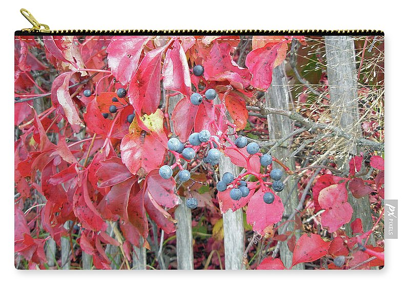 Foliage Carry-all Pouch featuring the photograph Virginia Creeper Fall Leaves And Berries by Mother Nature