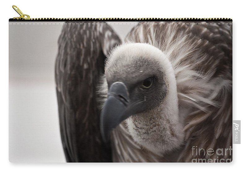 Vulture Carry-all Pouch featuring the photograph Vulture by Steve Purnell