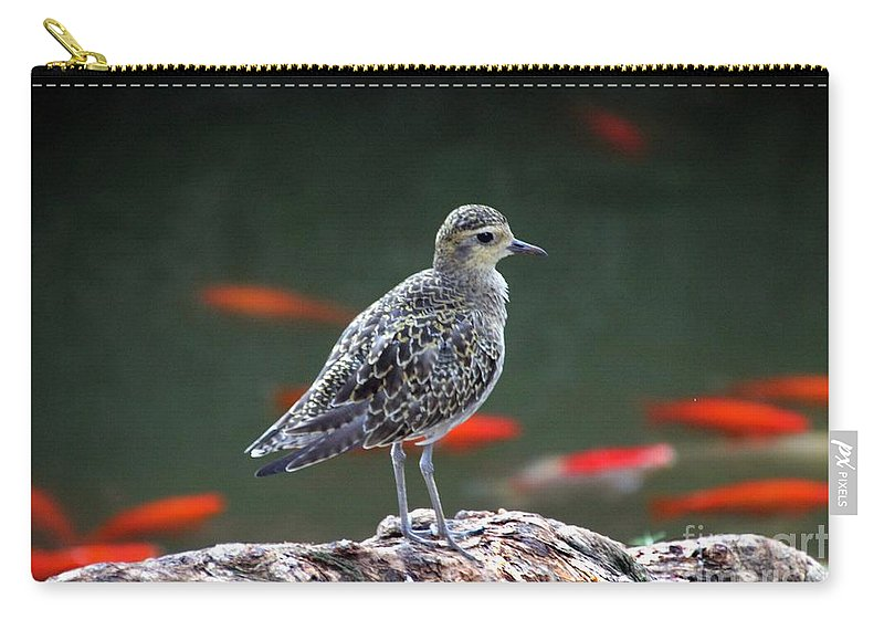 Pacific Golden-plover Carry-all Pouch featuring the photograph Waiting And Watching by Elizabeth Winter