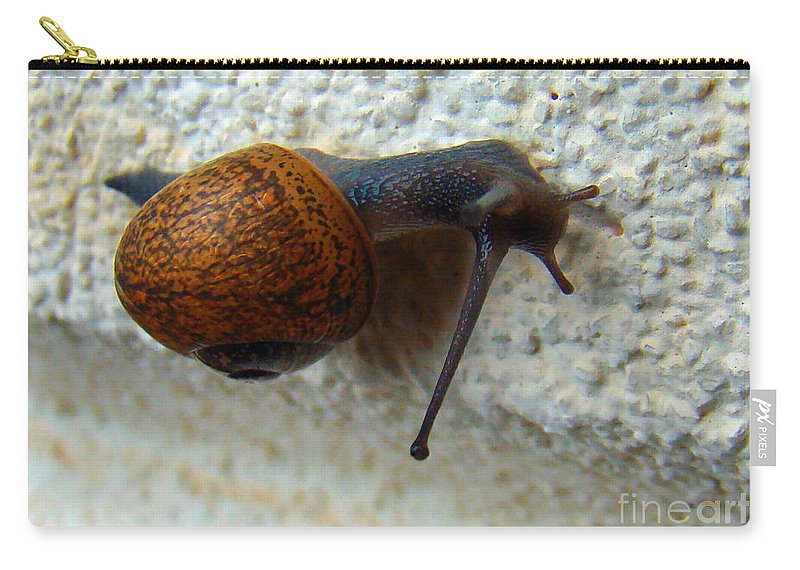 Garden Snail Carry-all Pouch featuring the photograph Wall Snail 1 by Nancy L Marshall