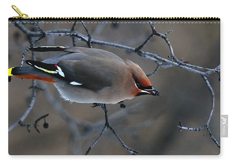 Bohemian Waxwing Carry-all Pouch featuring the photograph Wandering Through Scrub by Tony Beck