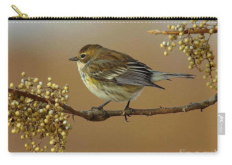Animal Carry-all Pouch featuring the photograph Yellow Rumped Warbler by Robert Frederick