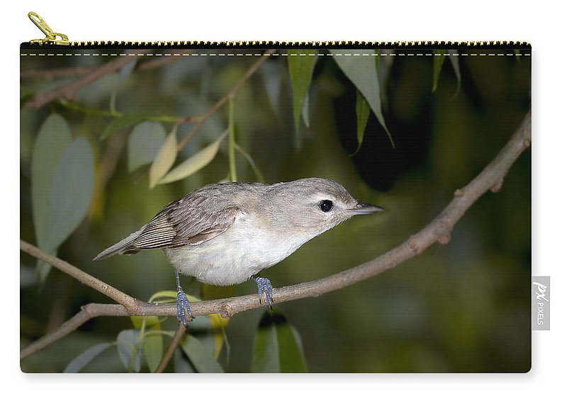 Animal Carry-all Pouch featuring the photograph Warbling Vireo by Jack R Perry