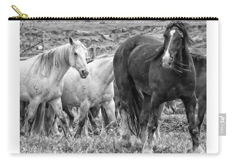 Horses Carry-all Pouch featuring the photograph Wary Stallion by Alice Gipson