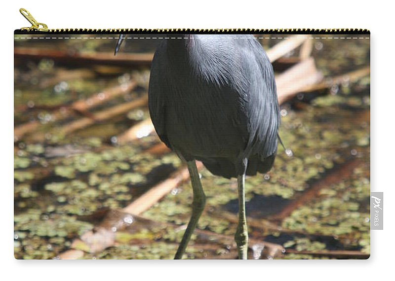Heron Carry-all Pouch featuring the photograph Watchful Little Blue Heron by Christiane Schulze Art And Photography