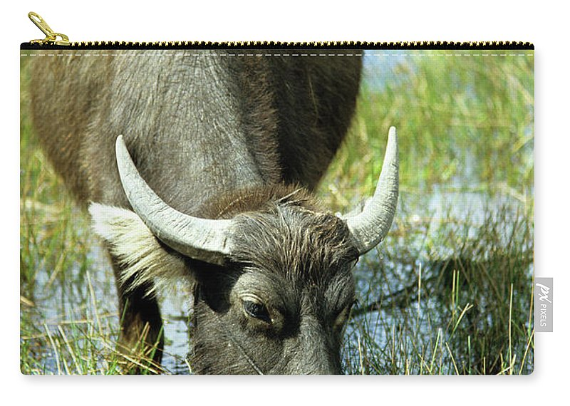 Cambodia Carry-all Pouch featuring the photograph Water Buffalo by Rick Piper Photography