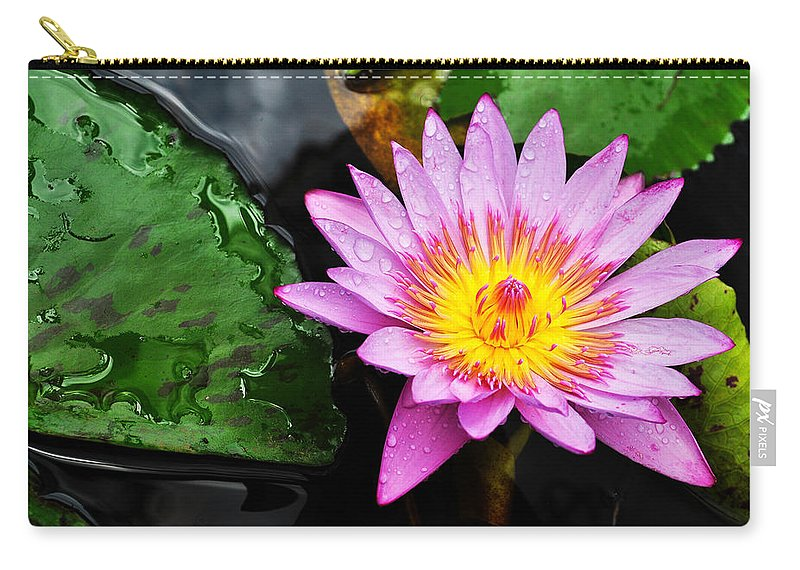 Water Lily Carry-all Pouch featuring the photograph Water Lily by Denise Bird