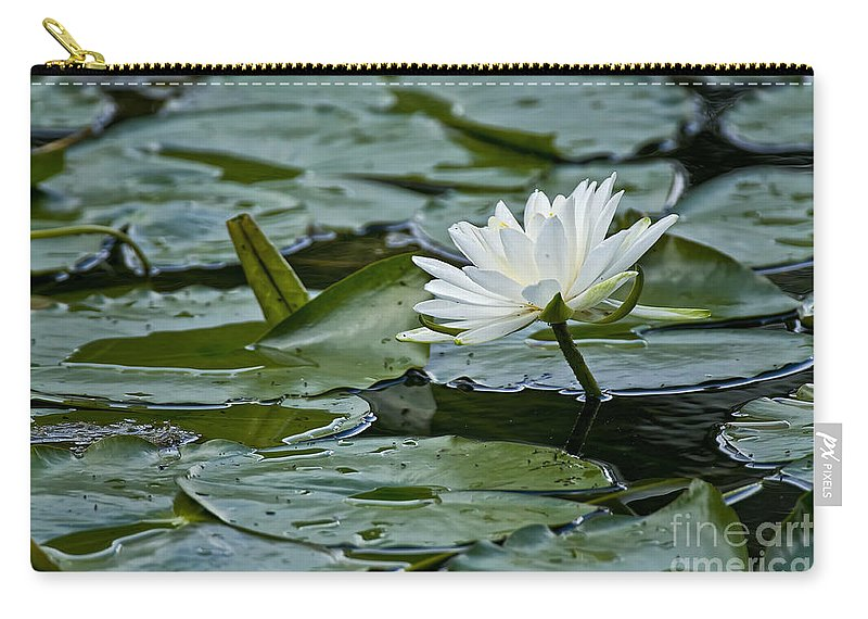 Water Lily Carry-all Pouch featuring the photograph Water Lily Pictures 55 by World Wildlife Photography