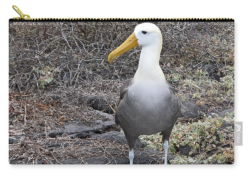 Diomeda Irrorata Carry-all Pouch featuring the photograph Waved Albatross Diomeda Irrorata by Liz Leyden