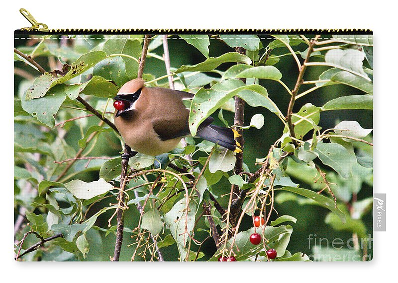 Cedar Waxwing Carry-all Pouch featuring the photograph Waxwing Meal by Cheryl Baxter