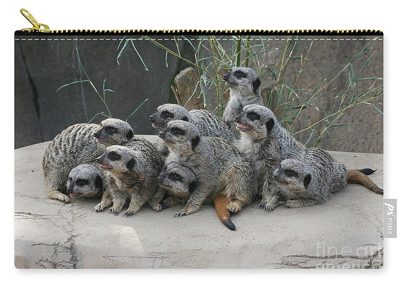 Meerkat Carry-all Pouch featuring the photograph We Are Family by Judy Whitton