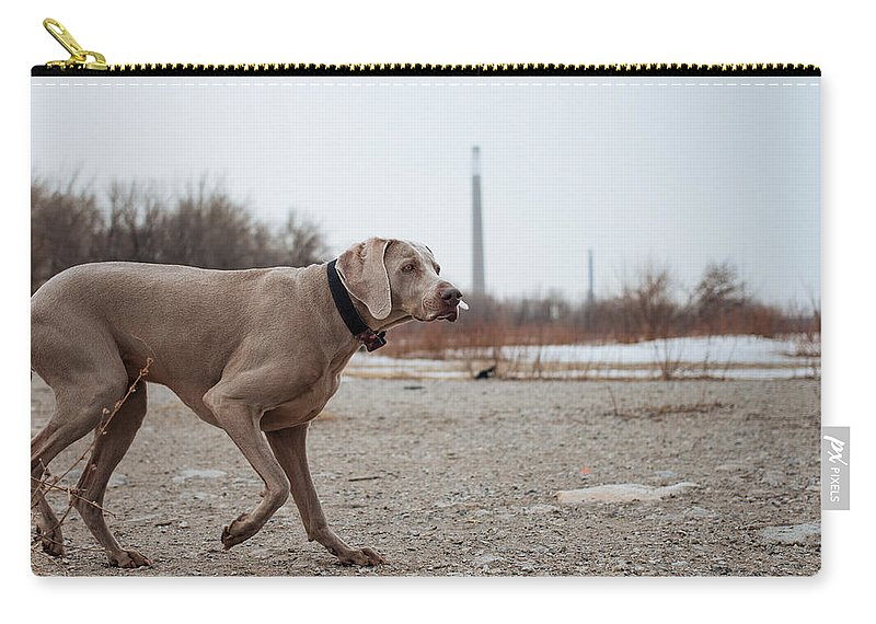 Weimaraner Carry-all Pouch featuring the photograph Weimaraner Points On Cherry Beach by Kyra Savolainen