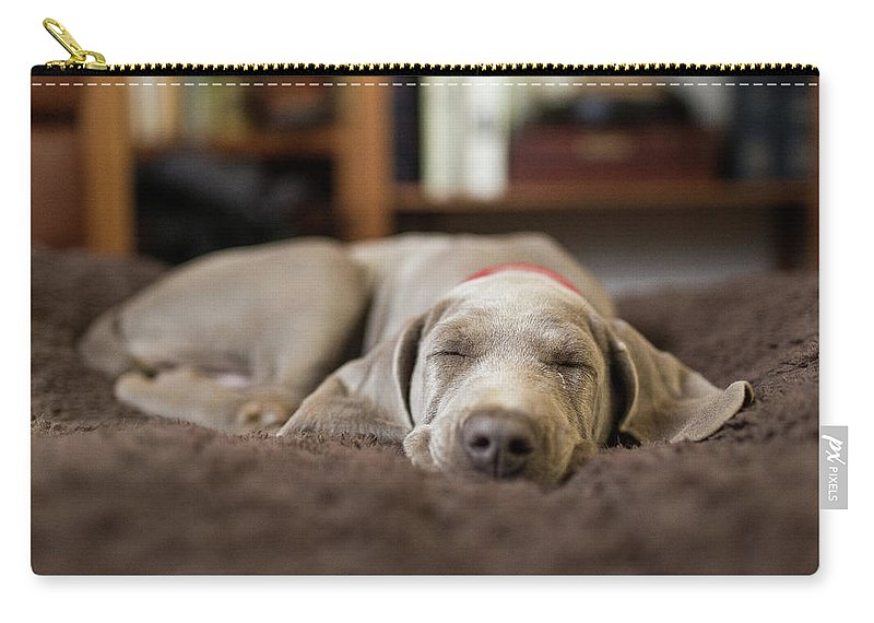 Pets Carry-all Pouch featuring the photograph Weimaraner Puppy Sleeping Indoors by Purple Collar Pet Photography