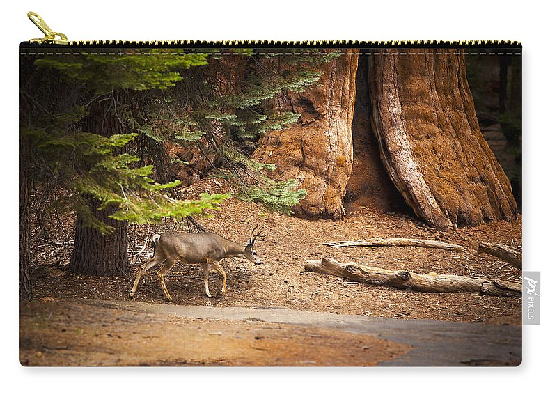 Deer Carry-all Pouch featuring the photograph Welcome Home - Sequoia National Forest by Angela Stanton