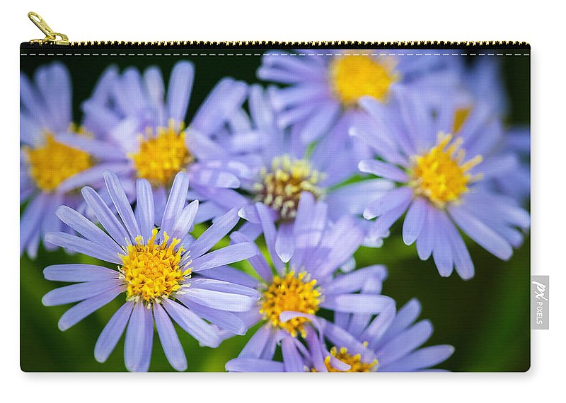 Glacier National Park Carry-all Pouch featuring the photograph Western Daisies Asters Glacier National Park by Rich Franco