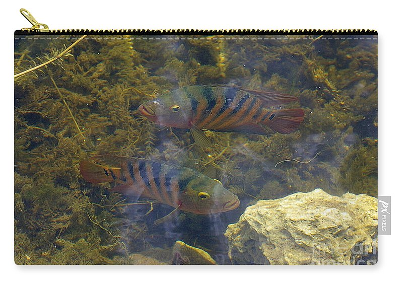 Fish Carry-all Pouch featuring the photograph What You Looking At by Nancy L Marshall